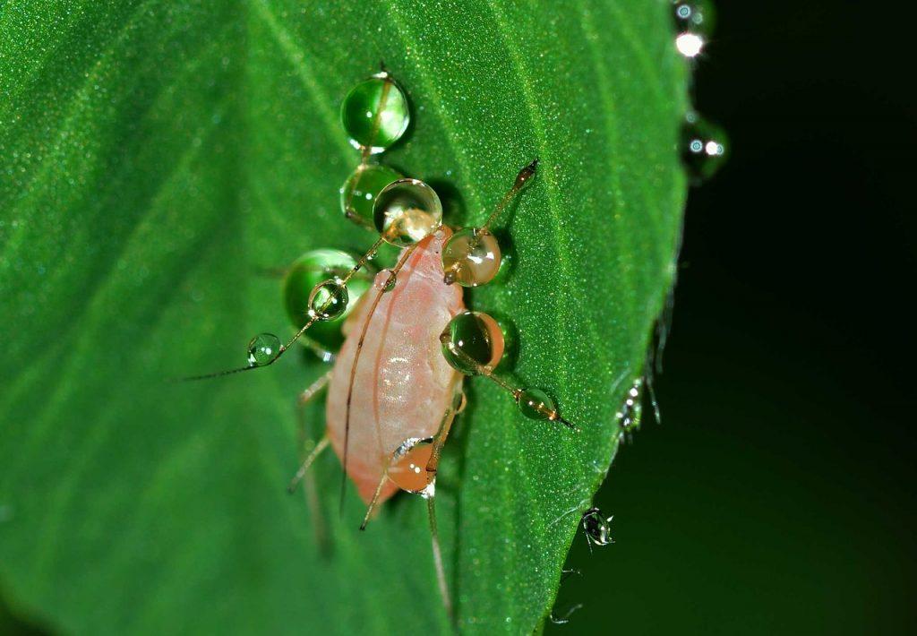 control de plagas en agricultura ecológica, industria auxiliar, control biológico.