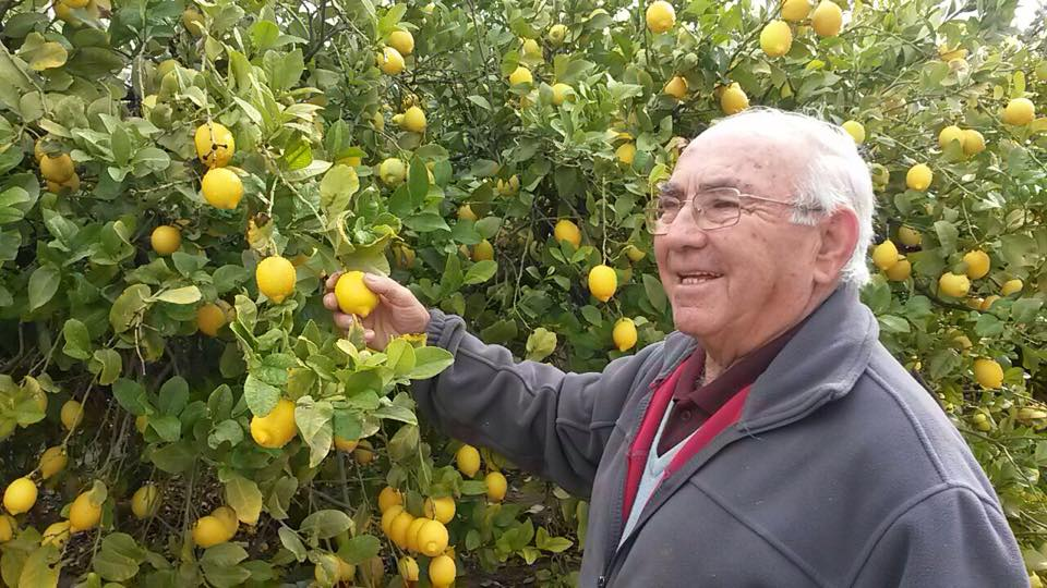 Limones ecológicos de Librilla, consejo de agricultura ecológica Murcia.