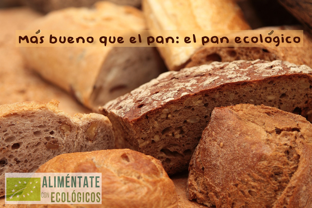 el pan ecológico tiene multitud de cualidades alimenticias